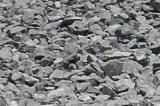 Щебень гравийный 20-40